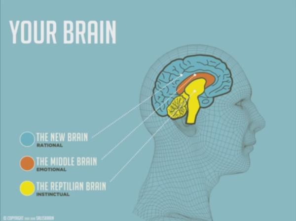 Come-funziona-il-cervello